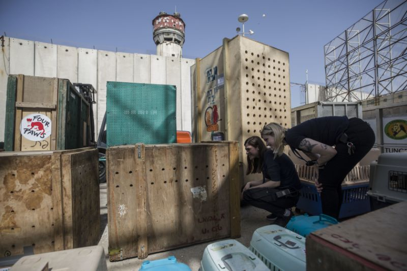 Evacuation zoo Rafah Jordanie