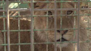 Plus de 40 animaux d'un zoo de la bande de Gaza évacués