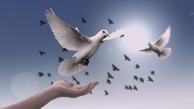 Bienvenuepalestine : la paix et la liberté